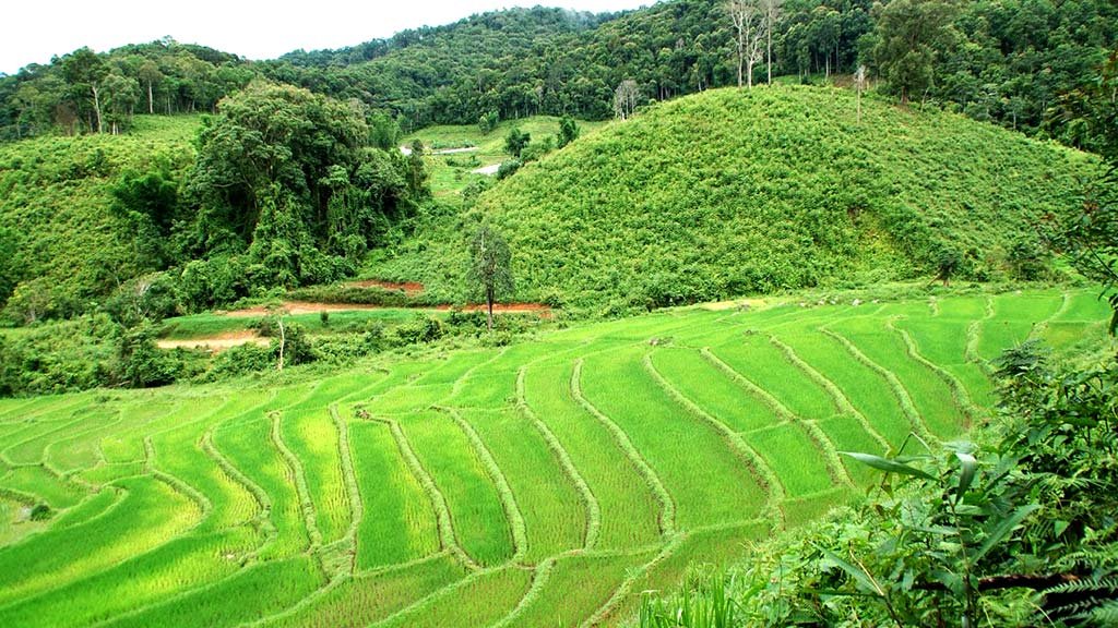 Rice fields, Doi Inthanon National Park.