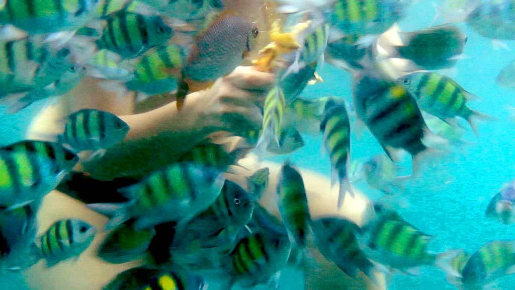 Tropical sea underwater.