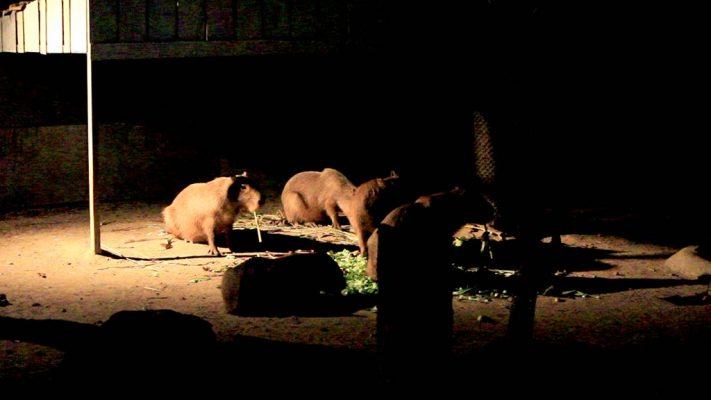 The Night Safari, Chiang Mai.
