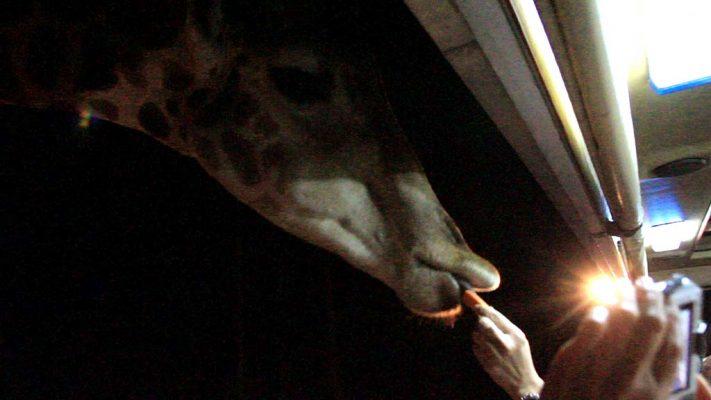The Night Safari